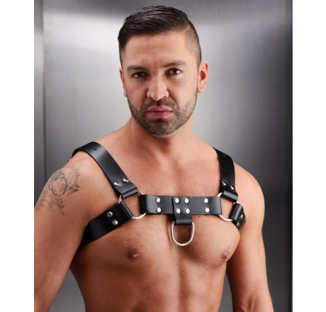 English Bull Dog Harness